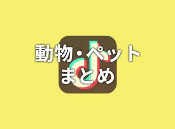 【TikTok】動物・ペットまとめ